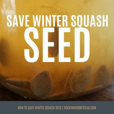 When purchasing organic vegetables from the grocery store, try saving seed from your favorite winter squash varieties for next year's harvest | Rockin W Homestead.com