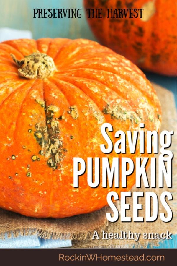Pumpkin seeds are a healthy snack for any time of the year. This guide to saving pumpkin seeds to eat will teach you how to roast, dehydrate, grind and store pumpkin seeds for healthy eating. Make and preserve them the way you like and save.