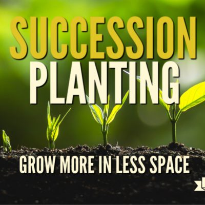 Succession planting involves growing many of the same, or complementary crops in the space garden spot continuously. This simple practice helps you maximize the yield that your garden can produce.