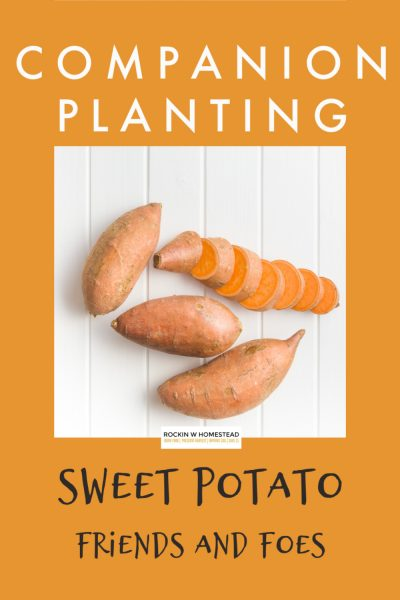 companion planting for sweet potatoes