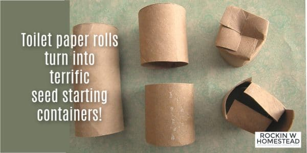 Toilet paper rolls turn into terrific seed starting containers