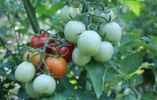 crops for food storage