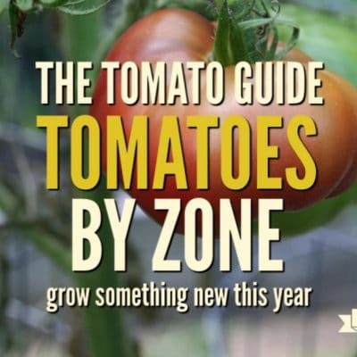 The Tomato Guide: Find a Tomato for Your Garden Zone