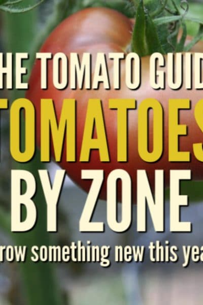 Use the tomato guide to find terrific varieties to fit your specific garden zone. Everyone can grow tomatoes.