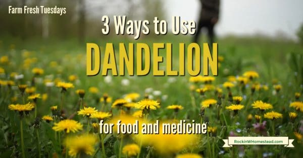 field of dandelion with a text overlay 3 ways to use dandelion for food and medicine