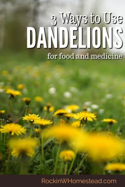 field of dandelion flowers with a text overlay. 3 ways to use dandelion for food and medicine
