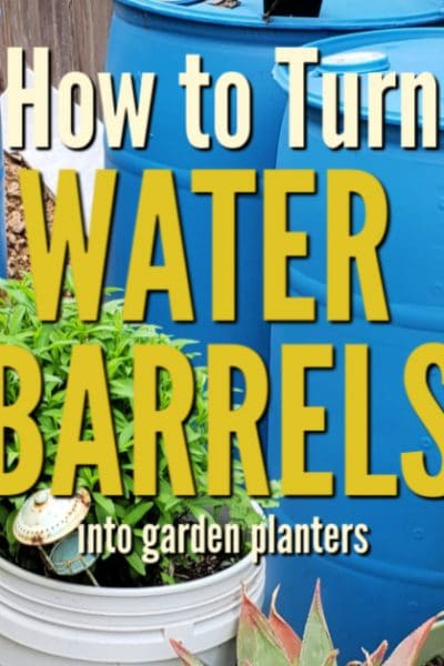 Used plastic water barrel planters are large enough to be used for fruits and vegetables. Look for them locally and follow these steps to make your own.