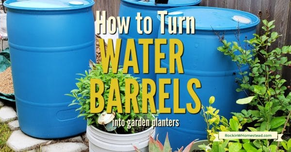Used plastic water barrels can be turned into garden planters for fruits and vegetables. Look for them locally and follow these steps.