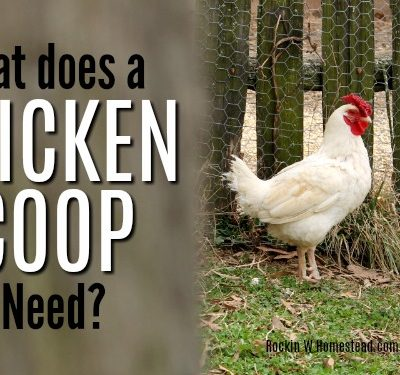 What Does a Chicken Coop Need?