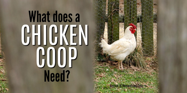 Pondering the idea of raising chickens often raises the question, what does a chicken coop need? Even if you have free range chickens in your backyard, you still need a chicken coop.