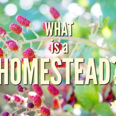What is a Homestead? Farm Fresh Tuesday #1