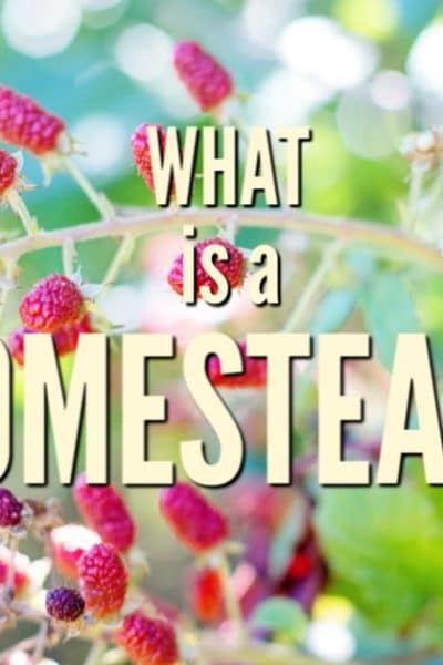What is a homestead? It is a lifestyle of self-sufficiency that might encompass raising animals, and growing and preserving food.