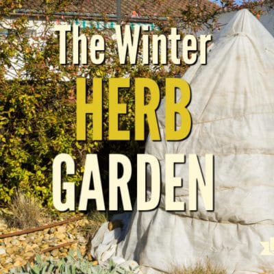 Preparing for the Winter Herb Garden