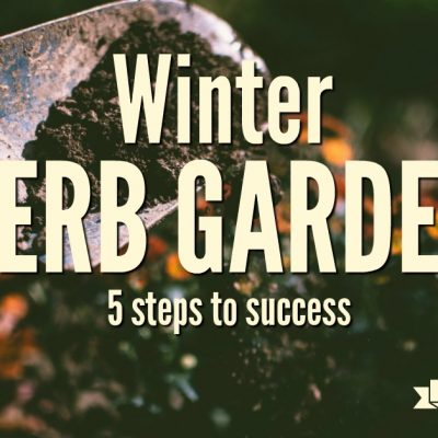 The Winter Herb Garden: 5 Steps to Success