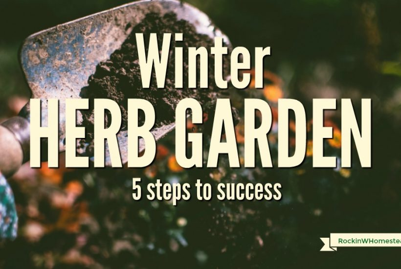 You can have your winter herb garden survive until spring when you follow these 5 steps for success. Learn the principles to help plants thrive and survive when it is cold outside.