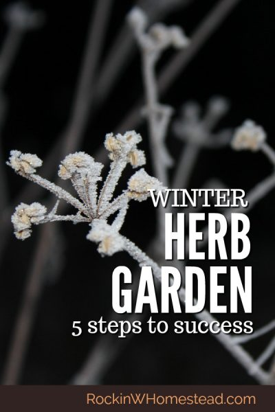 You can have your winter herb garden survive until spring when you follow these 5 steps for success. Learn the principles to help plants thrive and survive when it is cold outside.  #herbgarden #winter